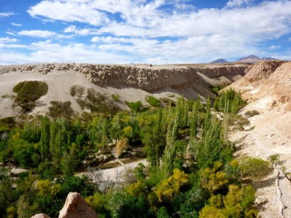 Desert oasis with a small river and trees in the Atacama Desert in Chile