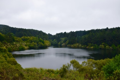 Lake surrounded by evergreens and shrubbery