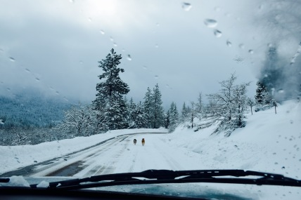 Following two dogs down the mountain on a stormy winter day on Mount Ashland