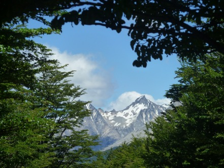 View of a snow covered mountain through the trees on a hike in Patagonia Chile