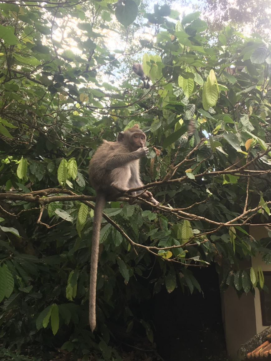 Monkey Eating His Mid Afternoon Snack
