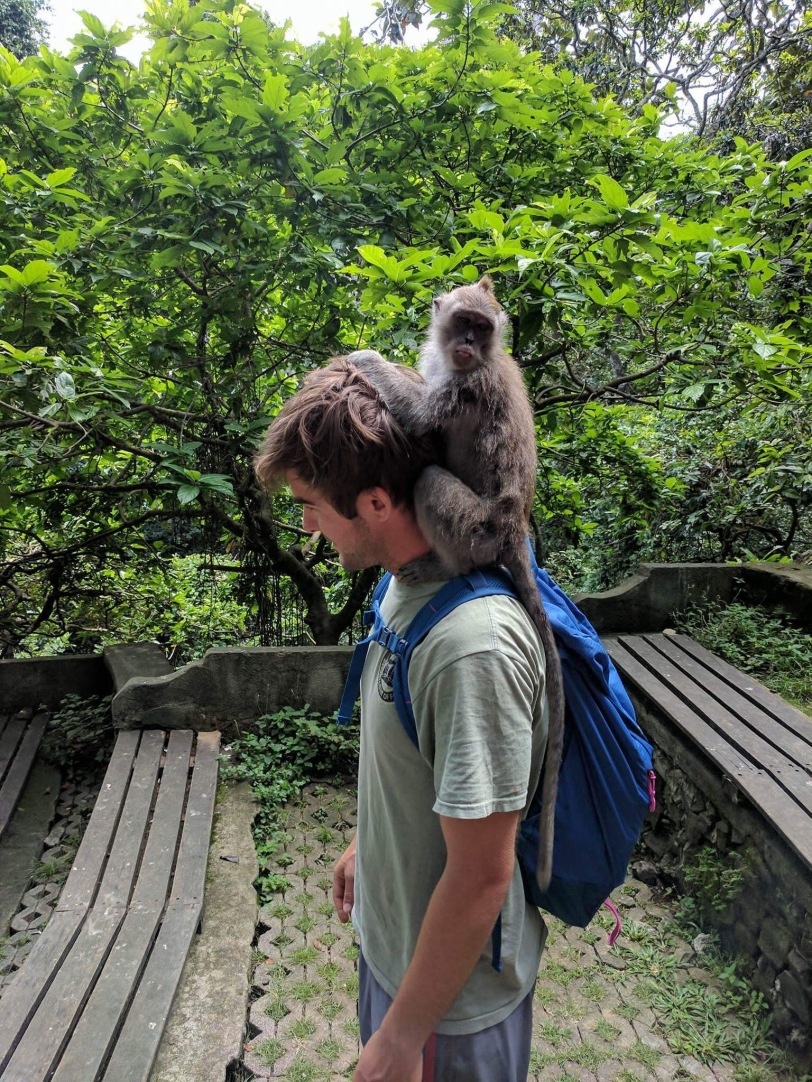 TJ Getting Groomed By A Monkey Inside The Monkey Forest In Ubud, Bali
