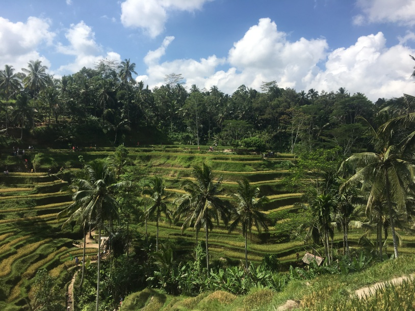 Exploring The Tegalalang Rice Terrace