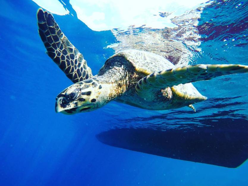 Turtle pal we met while snorkeling at Turtle Cove