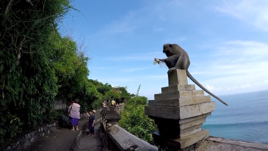 Monkey At Uluwatu Temple Eating A Snack He Stole