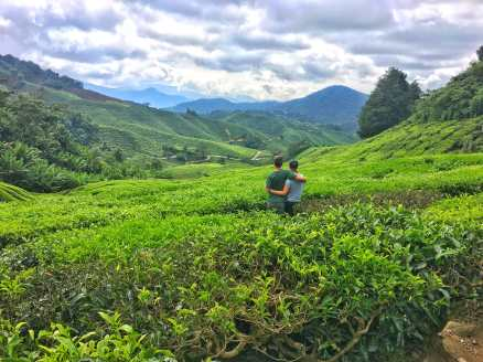 Enjoying the tea plantation outside the BOH tea factory in the cameron highlands of Malaysia