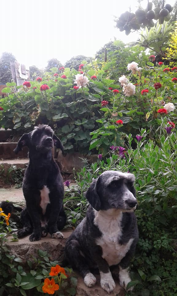 Allis study abroad pups Romeo and Julietta
