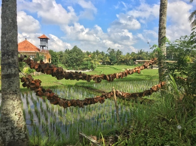 Beutiful rice field views in the village areas above the streets of Ubud, Bali