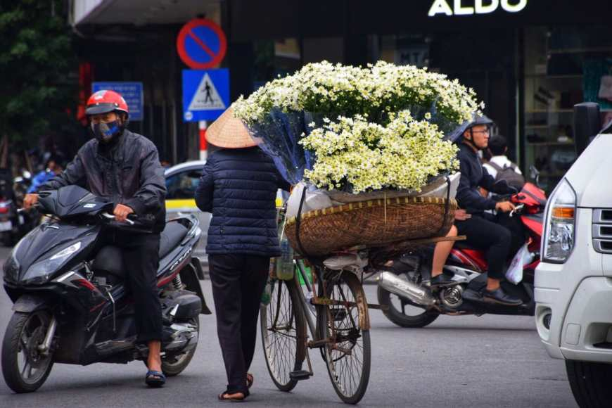 Vietnamese woman in conical hat pushing along a bicycle covered in flowers through Haoi