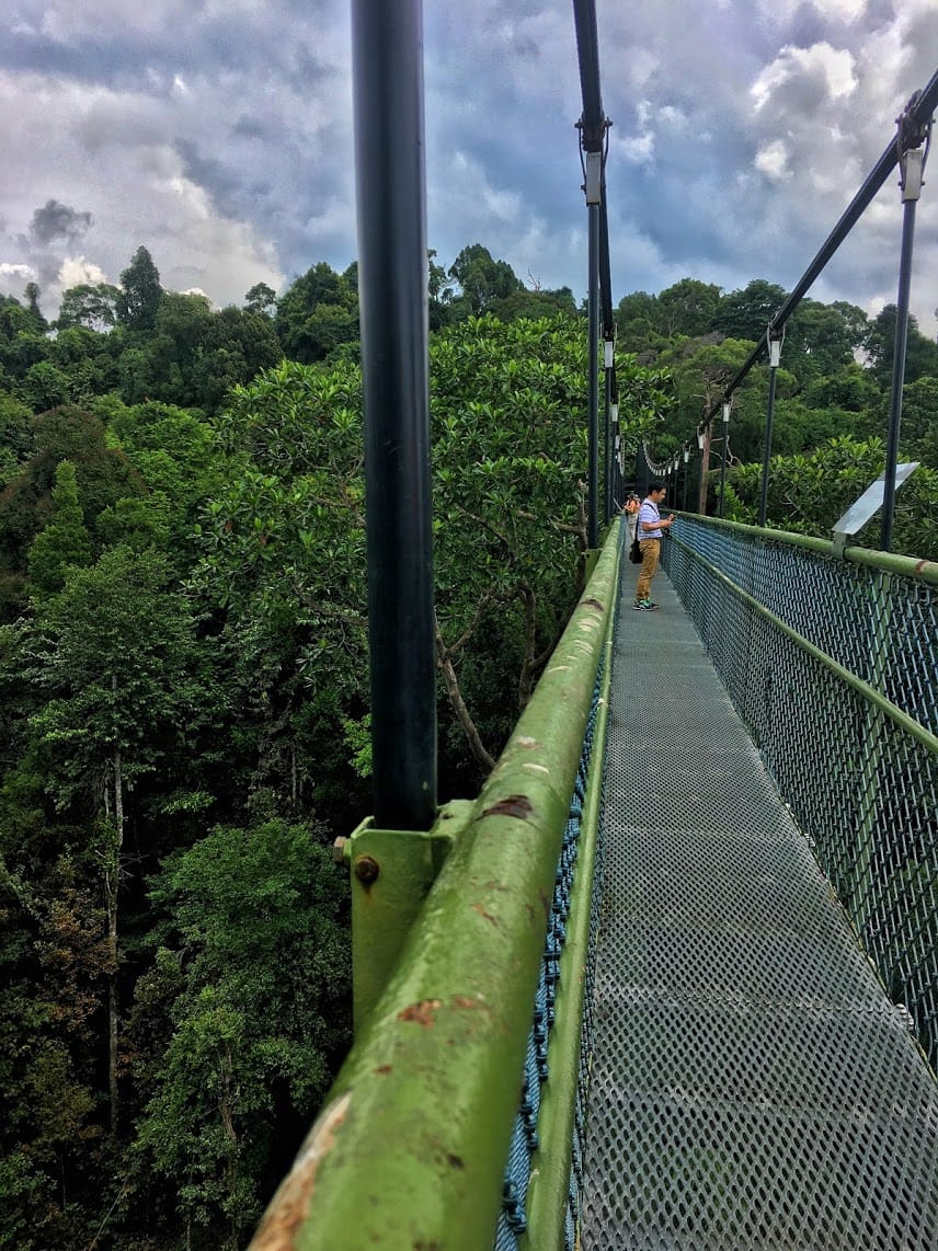 Green, hanging suspension bridge over a forest of trees with people walking on the far end of the bridge