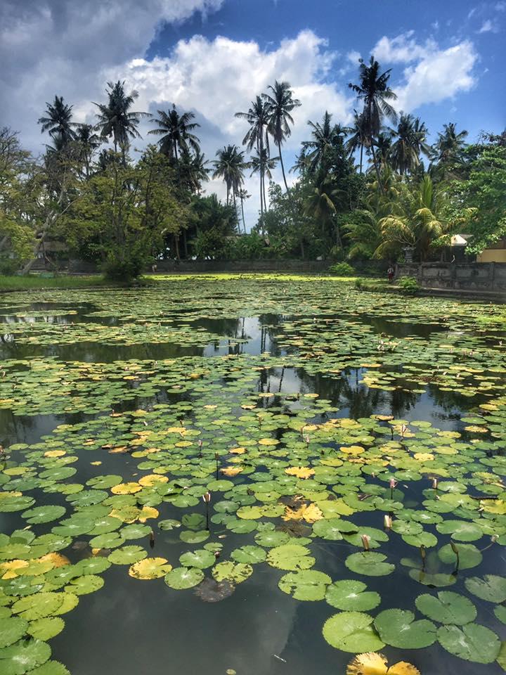 Freshwater lotus lagoon in Candidasa, Bali