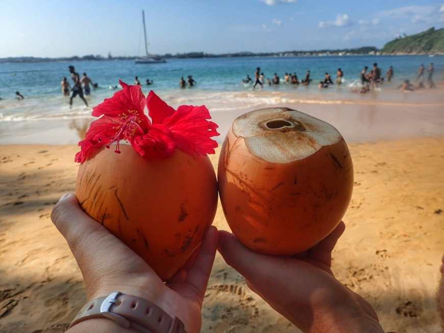 Two outstretched hands holding up baby coconuts on the beach, one with a flower poking out of the top