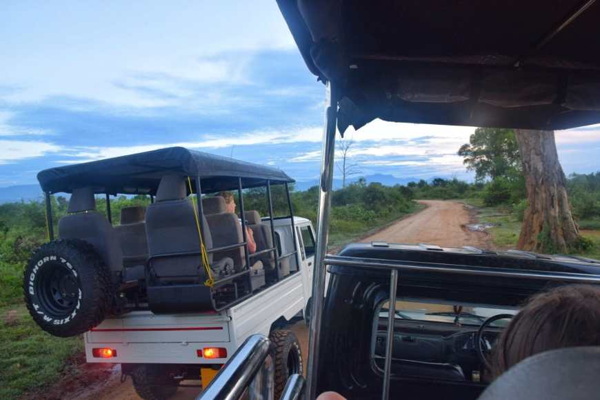 Safari jeeps driving down a dirt road in the middle of the jungle of Udawalawee nation park as sunrise takes place over the jungle